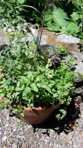 herb workshop 3